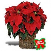 Christmas Hope, USA