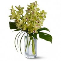 Cymbidium Orchids, USA