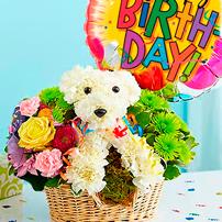 Birthday Puppy, USA