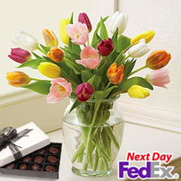 Rainbow of Tulips FREE CHOCS!, USA