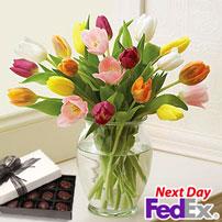 Rainbow of Tulips FREE CHOCS!, Golden