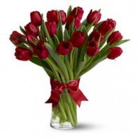 Premium Tulips, USA